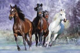 kuajt