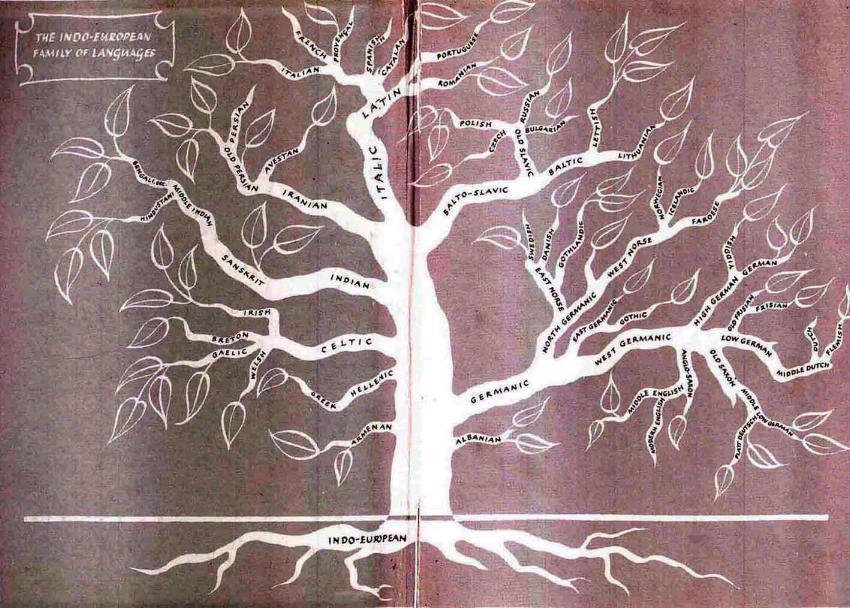 Pema e gjuheve Indo-Evropiane